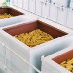 espigas de maiz en secado Parent Seeds